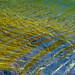 Lignes d'herbes, lignes d'eau by Corinne Queme