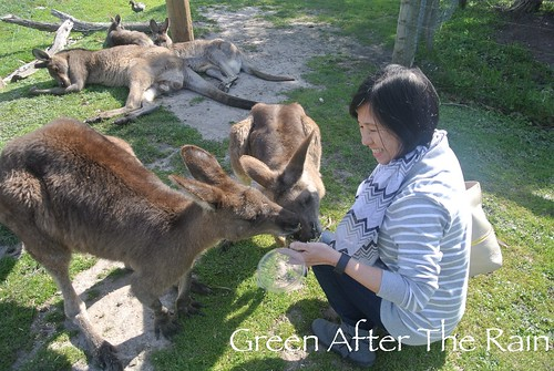 150911g Phillip Island Maru Koala and Animal Park _030