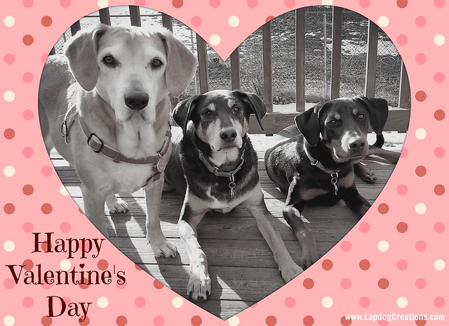 ValentInes Day 2016 #rescued dogs #adoptdontshop #LapdogCreations