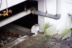 Today's Cat@2016-03-14
