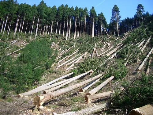 अंधाधुंध वृक्ष कटान से पर्यावरण प्रभावित हो रहा है