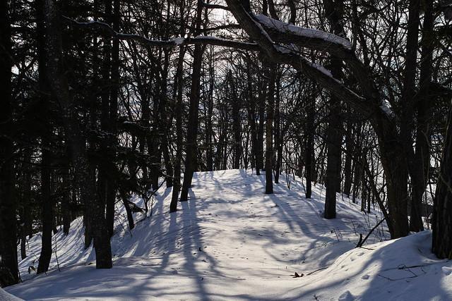 Snowshoe walk, Sigma DP2 MERRILL, Sigma 30mm F2.8
