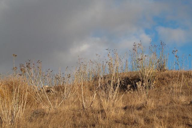 Dry Hillside