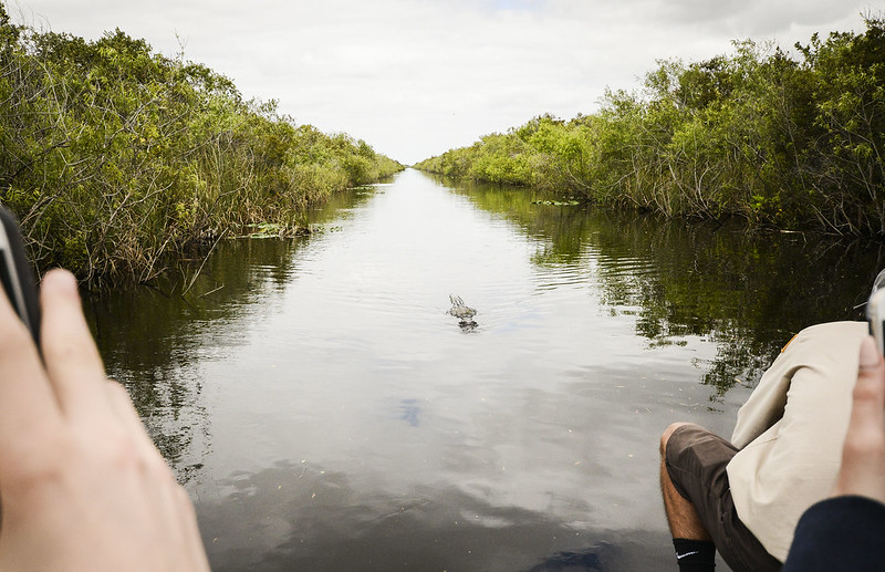 Everglades_2