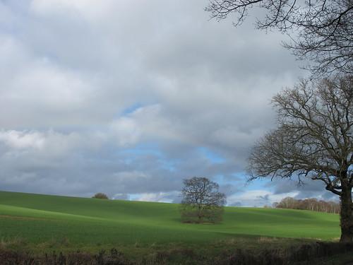 Lone Tree in Field, near Carter's Clay