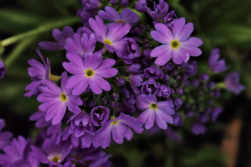 Project 366, Day 118: Pretty In Purple