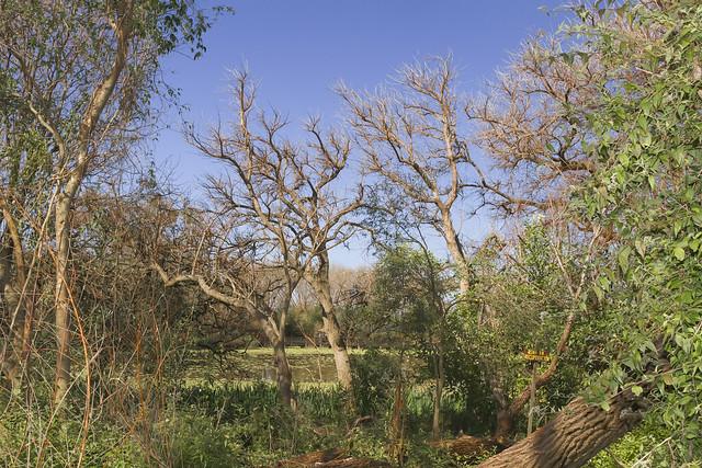 Reserva Ecológica Vicente López