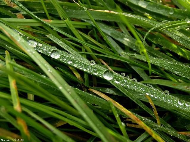 Brin d'herbe scintillant