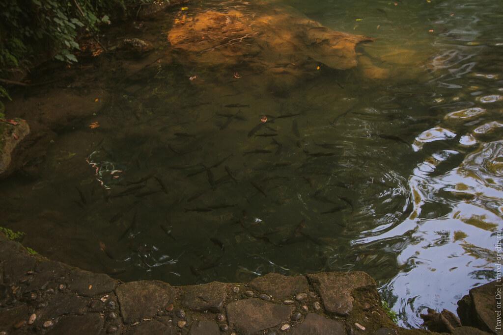 Kursunlu Waterfall Nature Park, Antalya / Парк Куршунлу, Анталия