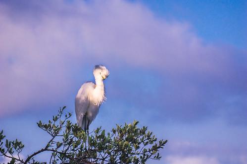 trees beach sunrise pelican whitepelican spoonbill greatwhiteegret littleblueheron 2016 2216 floridakeyswildbirdcenter fkwbc cormornant wowwbc