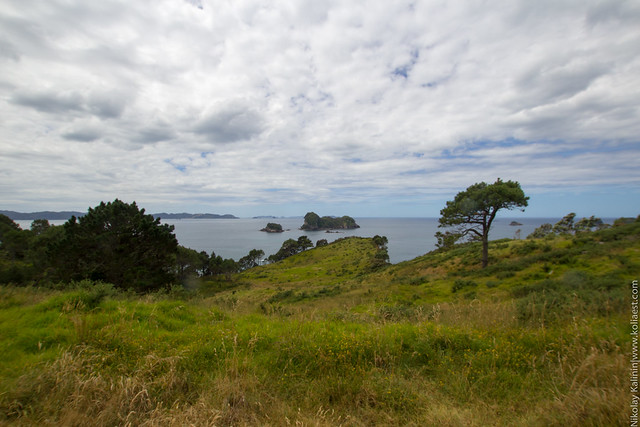 NZ_16-16