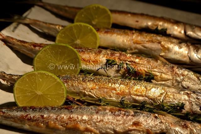 Maquereaux Grillés à la Plancha © Ana Luthi Tous droits réservés 0005