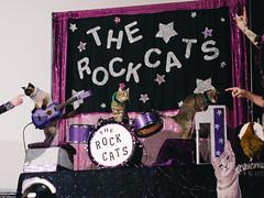 The Amazing Acro-Cats