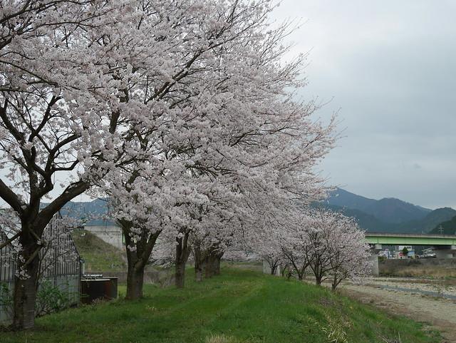 Photo:P1240363 By sukitamba