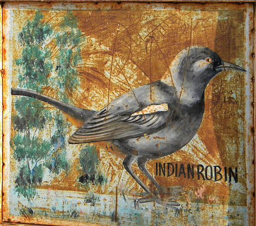 A painted bird identification sign of an Indian Robin in Agra, India