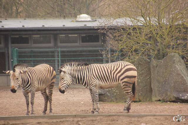 Nieselregen im Tierpark Friedrichsfelde 25.03.2016102