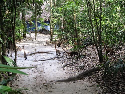 Tikal et ses pizotes