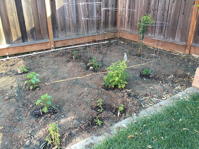 Planted vegetables