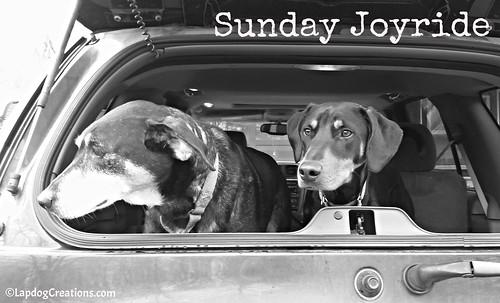 Sunday Joyride with Tut & Penny #dogsincars #sundayjoyridge #LapdogCreations ©LapdogCreations