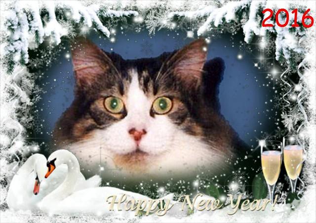 Mitzi Sitting Up New Year's