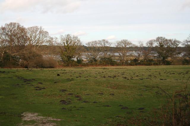 Newton Bay, Poole Harbour