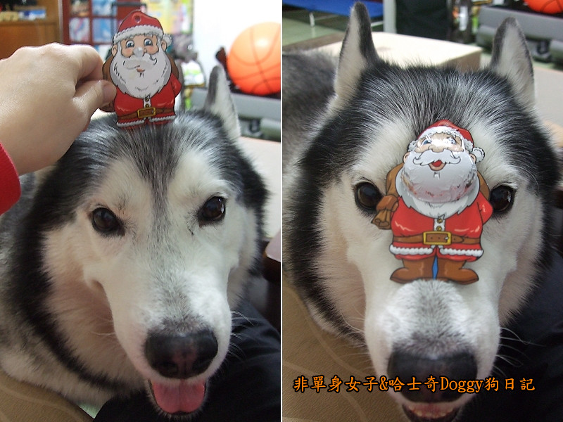 Doggy聖誕節紅色聖誕樹髮箍裝扮09