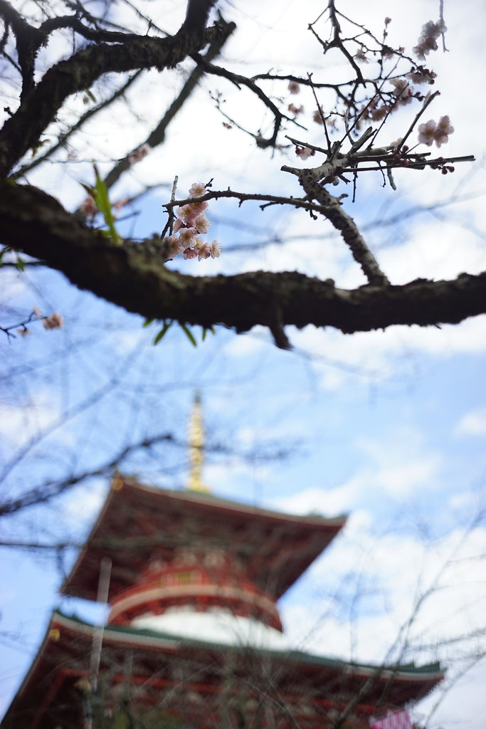 Plum blossoms of Shinsho-ji Temple,Narita-san 2016/02 No.1.