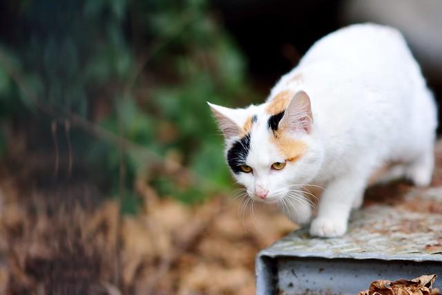 ネコの写真3