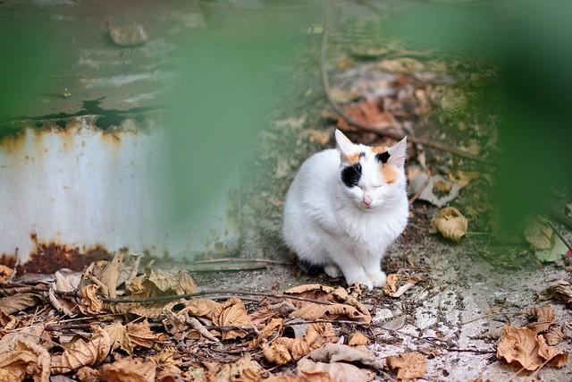 緑の葉の隙間から撮影したネコの写真