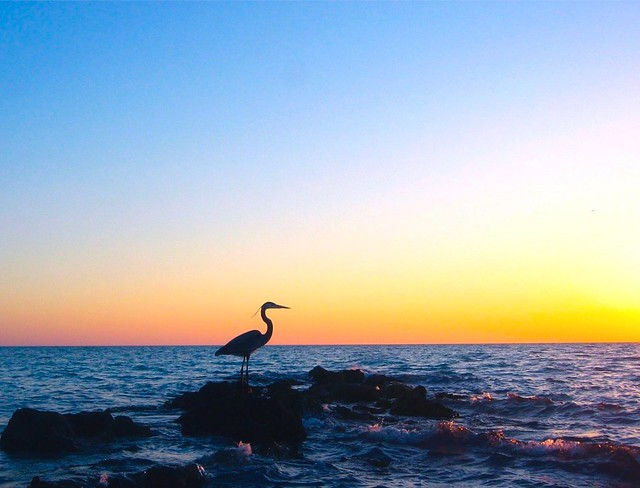 Heron at dusk 2