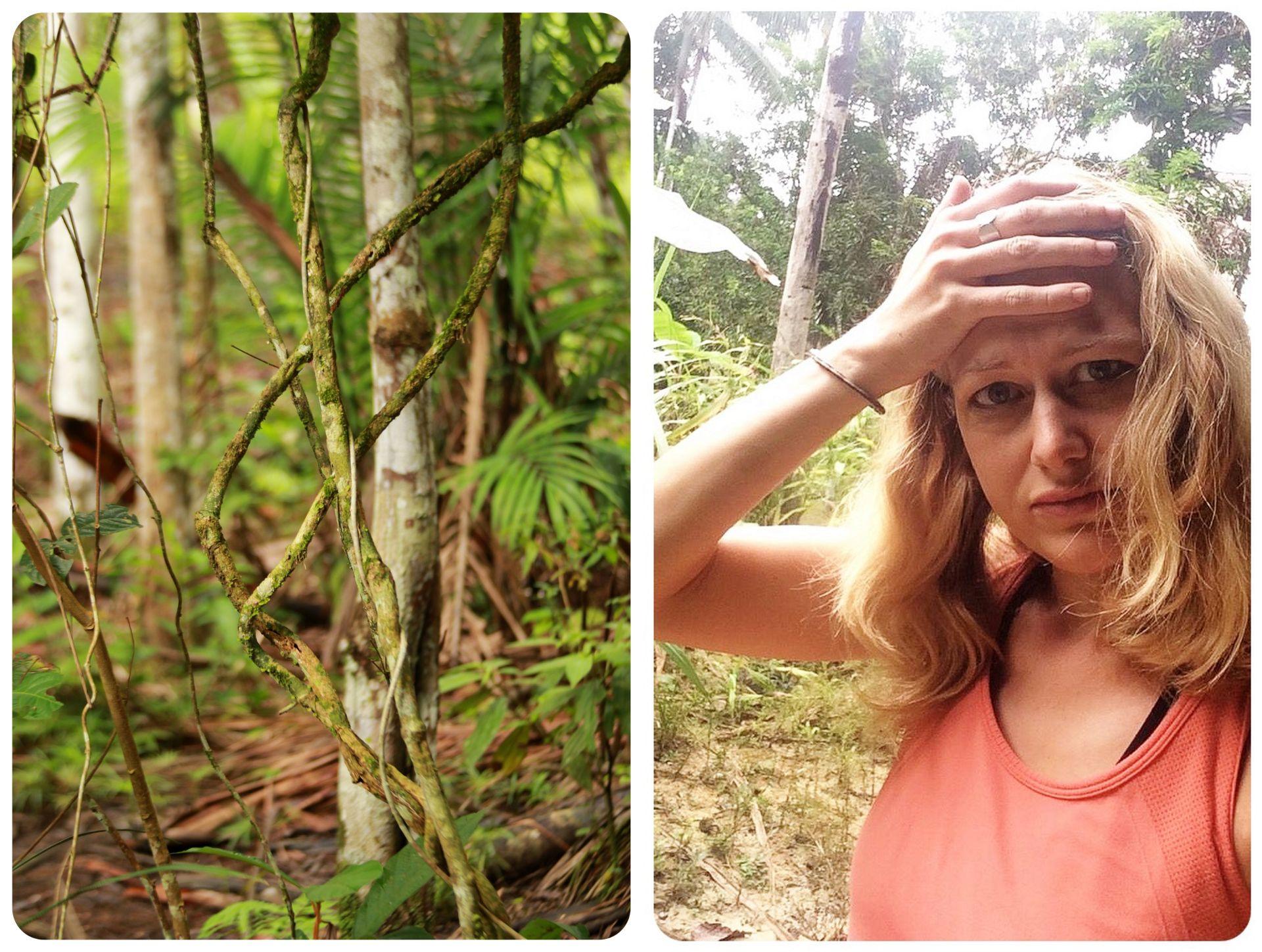 Ayahuasca Plant & Dani