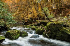 Mother nature at her best ... #nature #natuur #forrest #bos #trees #bomen #water #rocks #stenen #kleuren #colors #autumn #herfst #luxemburg #luxembourg #undiscoveredpictures #photowalk #phototravel #waterfall #waterval #irrel #Wasserfalle #duitsland #bund