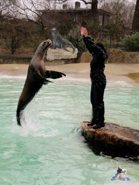 Zoo Berlin 11.03.2016   044