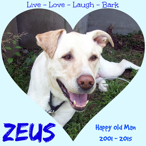 Live Love Laugh Bark - Just as Zeus Did. I miss him every single day. #CancerBites #LapdogCreations ©LapdogCreations