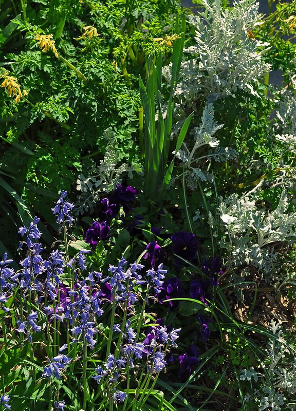 Front Garden (3)