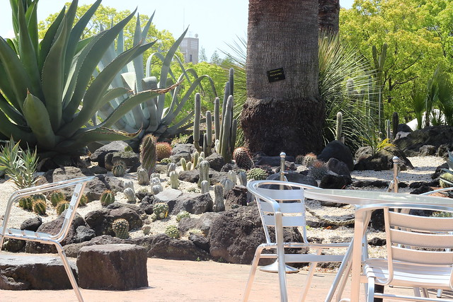 cactus gerden