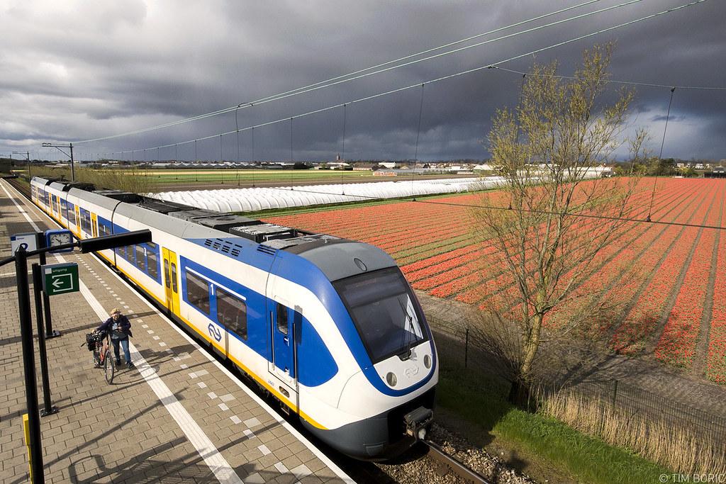 Trem chegando à estação Hillegom, na Holanda, cercado de campos de tulipas