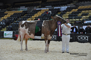 14 avril 2016 - Expo-printemps du Québec - Jugement Holstein Rouge et Blanc