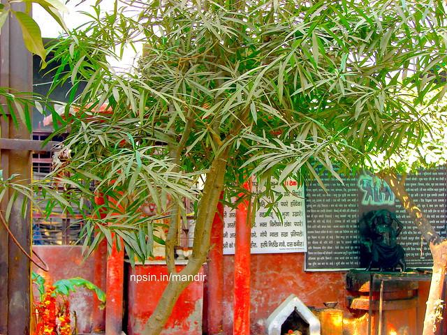 Shri Shani Dham in Temple