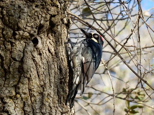 Potrero County Park - specht