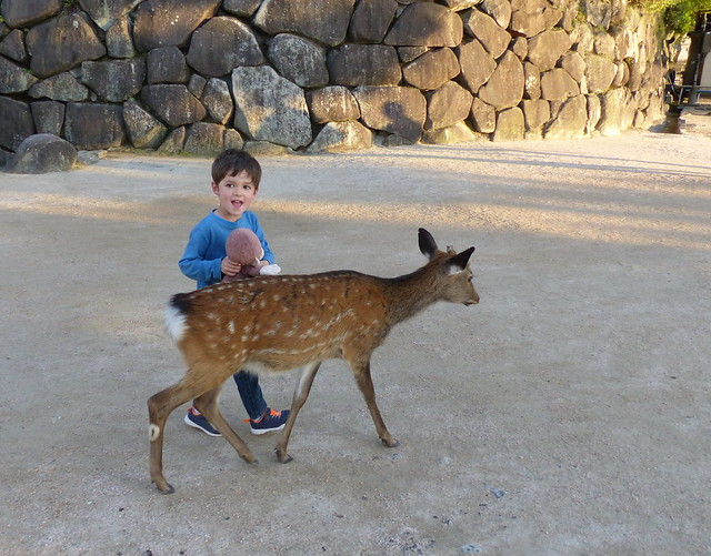 Monkey patting a deer