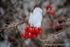 01162016-winter_publicareas-9387