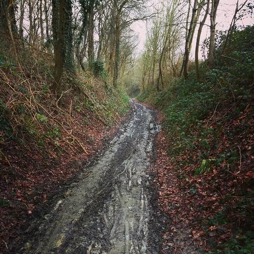 Wandelingetje in het bos ❤ #winter #hiking #belgianwinter #modder #projecthiking 👟 20/500