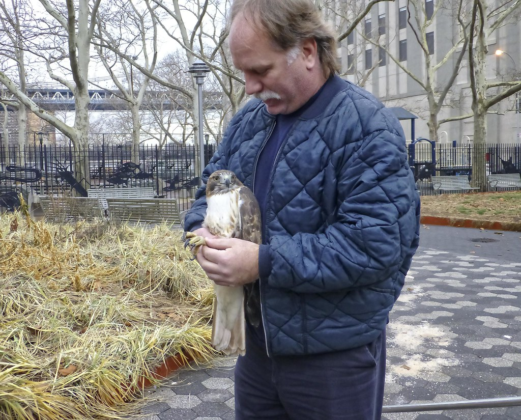 Hawk rescue on the Lower East Side