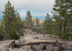 Horse Flats Campground, ANF, CA, USA
