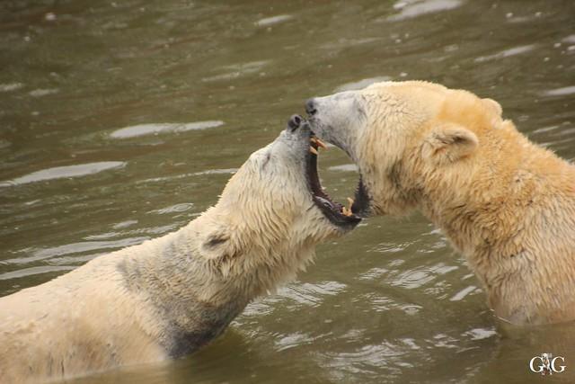 Wasserspaß für Tonja+Wolodja Tierpark 06.03.201641