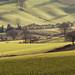 Light on Fields I by ChrisDale