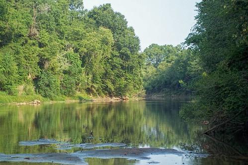 trees river mississippi woods waterscape hattiesburg ilobsterit