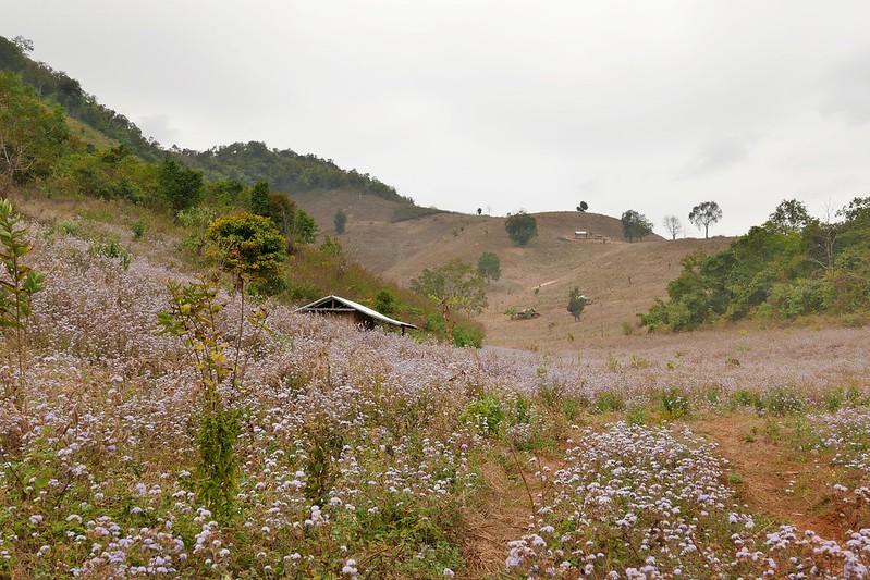 Trotz der Trockenheit blüht es auf den Berghängen. Wir fühlen uns ein bisschen wie in der Schweiz