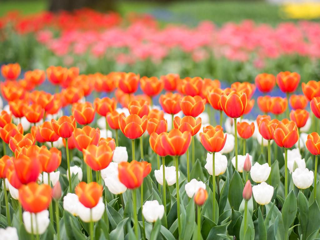春の昭和記念公園②